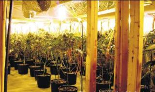 Marijuana Grow Home Info courtesy of Michelle Makos
